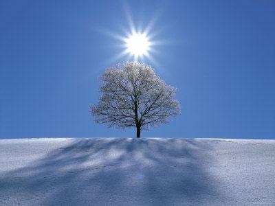 Winter Solstice Tree